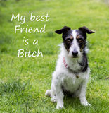 Wycena z ślicznym psem Mój najlepszy przyjaciel jest dziwką Zdjęcia Stock