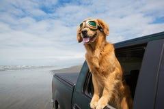 Wycieczka samochodowa dla psa obrazy royalty free