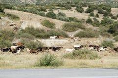 Wycieczka z przygodą w Greece zdjęcia royalty free
