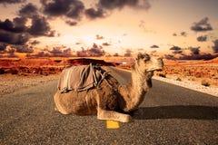 Wycieczki samochodowe i przygody Maroko krajobraz dromader przejażdżka Obrazy Stock