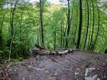 Wycieczkować ślad pochodzi od bardzo stromego skłonu w wiosna lesie zdjęcia royalty free