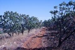 WYCIECZKOWAĆ ślad PRZEZ łaty CUKROWI BUSH drzewa obrazy stock