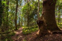 Wycieczkować ścieżkę w tropikalnym lesie tropikalnym Zdjęcie Stock