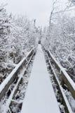Wycieczkować ścieżkę w zimie Obraz Royalty Free