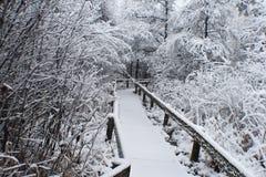 Wycieczkować ścieżkę w zimie Zdjęcie Stock