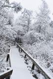 Wycieczkować ścieżkę w zimie Fotografia Royalty Free