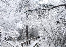 Wycieczkować ścieżkę w zimie Zdjęcia Stock