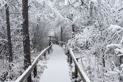 Wycieczkować ścieżkę w zimie Fotografia Stock