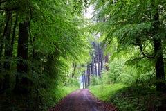 Wycieczkować ślad w zieleń mokrym lesie przy wiosną Obrazy Royalty Free