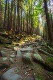 Wycieczkować ślada przez gigantycznych redwoods Zdjęcia Stock