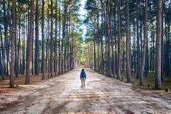 Wycieczkować mężczyzna z plecaka odprowadzeniem w lesie Zdjęcia Royalty Free