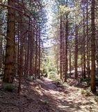Wycieczkować przez lasowej ścieżki przy Parnitha górą obrazy royalty free