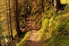 Wycieczkować wrażenie w Czarnym lesie wzdłuż Roetenbach w jesieni, Niemcy Magicznej jesieni Forrest Kolorowy spadek obrazy stock