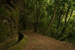 Wycieczkować wzdłuż levada na maderze Zdjęcie Royalty Free