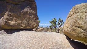 Wycieczkować Joshua drzewa parka narodowego Zdjęcie Stock