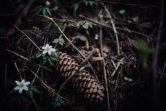 Wycieczkować przez wysokiego lasu Obrazy Royalty Free