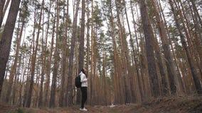 Wycieczkowicz dziewczyna z plecaka odprowadzeniem w sosnowym lesie, tylni widok Aktywny styl życia i przygoda w przyrody naturze zbiory wideo