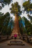 Wycieczkowicz, podziwia Gigantycznej sekwoi drzew generała Sherman Zdjęcia Stock