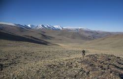 wycieczkowicz w mongolian krajobrazie Obraz Royalty Free