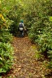 Wycieczkowicz w Rododendronowym lesie Zdjęcia Royalty Free