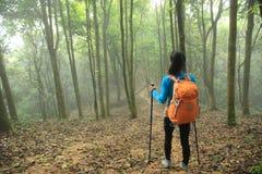 Wycieczkowicz wycieczkuje w wiosna mgłowym lasowym śladzie Obraz Stock