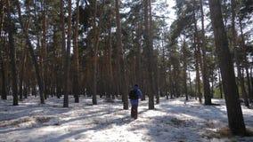 Wycieczkowicz z plecaka odprowadzeniem w sosnowym lesie zakrywającym z głębokim śniegiem Zimy aktywność i odtwarzania pojęcie zdjęcie wideo