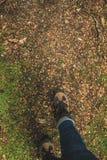 Wycieczkowicza odprowadzenie na las ziemi zdjęcia royalty free