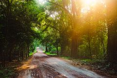 Wycieczkowicza odprowadzenie w dżungli Drogowym lasowym słońcu Asia Sri Lanka zdjęcie stock