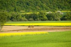 wycieczkowy koniach. obraz royalty free