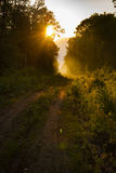 Wycieczkujący ścieżkę i zmierzch w pięknym drewno widoku, inspiracyjny lato krajobraz w lasowym Chodzącym footpath lub jechać na  Fotografia Stock