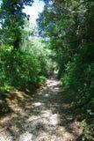 Wycieczkujący ścieżkę po środku zielonego lasu, zdjęcie stock