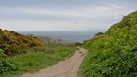 Wycieczkujący ślad między bujny zielenieje krzaki wzdłuż falez howth, Ireland zdjęcie royalty free