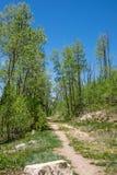 Wycieczkujący ślad prowadzi las drzewa w Nowym - Mexico Obraz Royalty Free
