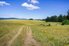 Wycieczkujący ślad wśród kwiat zakrywać łąk na wzgórzach północny San Fransisco trzymać na dystans Zdjęcia Royalty Free