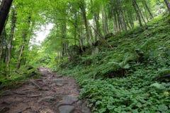 Wycieczkujący ślad w bujny zielenieje las w lato czasie zdjęcia stock