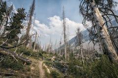 Wycieczkujący ślad w sierra Nevada góry Obraz Stock