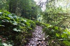 Wycieczkujący ślad w zielonym lato lesie z światłem słonecznym, po deszczu zdjęcie stock