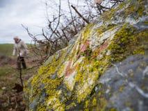 Wycieczkujący na śladzie Lahnwanderweg blisko Runkel, Hessen, Niemcy Obrazy Royalty Free