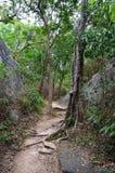 Wycieczkujący przez dżungli, Srí Lanka Obraz Stock