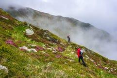 Wycieczkujący w górach w lecie wśród różowych rododendronowych kwiatów, Zdjęcie Royalty Free