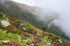 Wycieczkujący w górach w lecie wśród różowych rododendronowych kwiatów, Obraz Royalty Free
