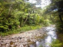 Wycieczkujący Przez Luksusowych lasów Fiordland, Nowa Zelandia Zdjęcie Stock