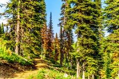 Wycieczkuje ślad przy słońcem Osiąga szczyt w kolumbiach brytyjska, Kanada fotografia stock