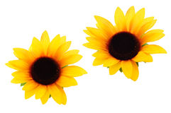 wycinanka słoneczniki Obrazy Royalty Free