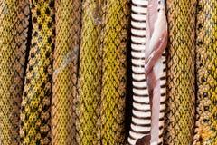 Wycinanka wąż uszeregowywający obraz stock