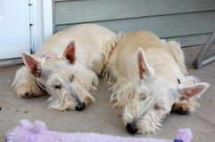 wyczerpany Fotografia Royalty Free