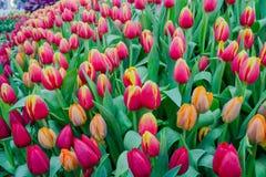 Wydarzenie hodowli rośliny w zimie Obraz Royalty Free