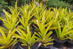 Wydarzenie hodowli rośliny w zimie Obrazy Royalty Free