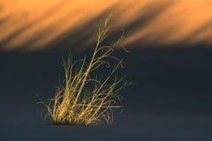 wydmowa trawy. fotografia stock
