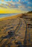 Wydmowego powozika ślada na ranek plaży Fotografia Stock